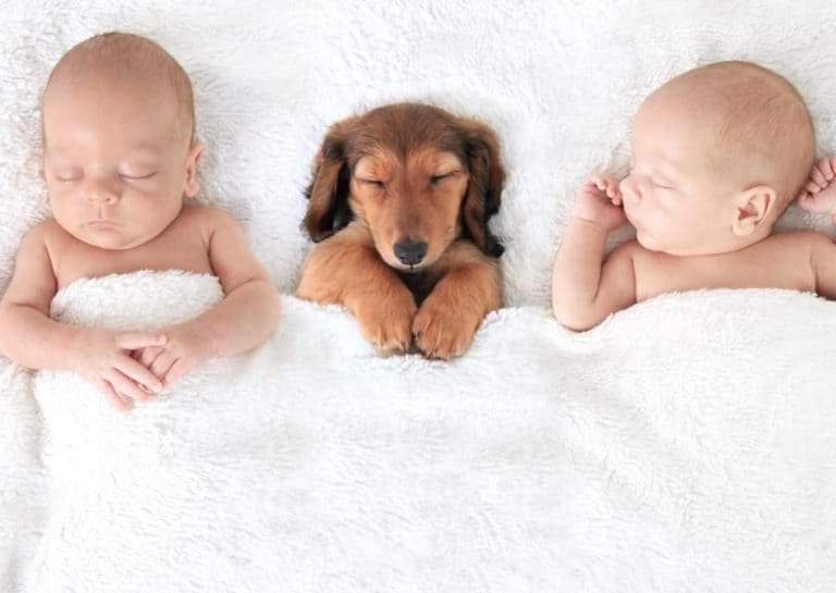 How To Prepare Your Dog For A Baby And Exact Steps That Worked For Us