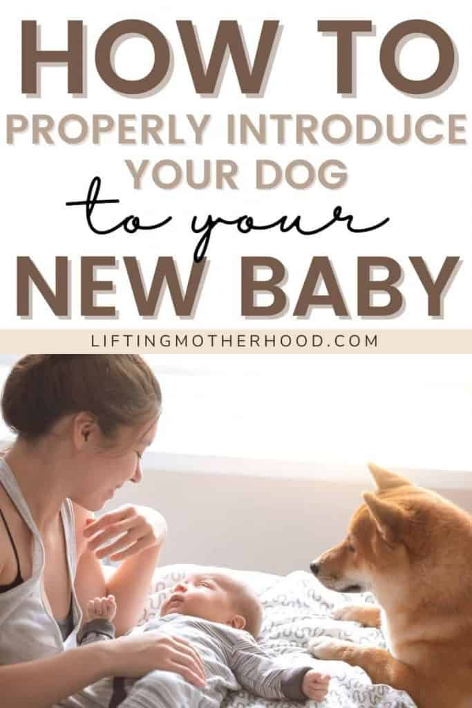 introduce dog to new baby pinterest pin